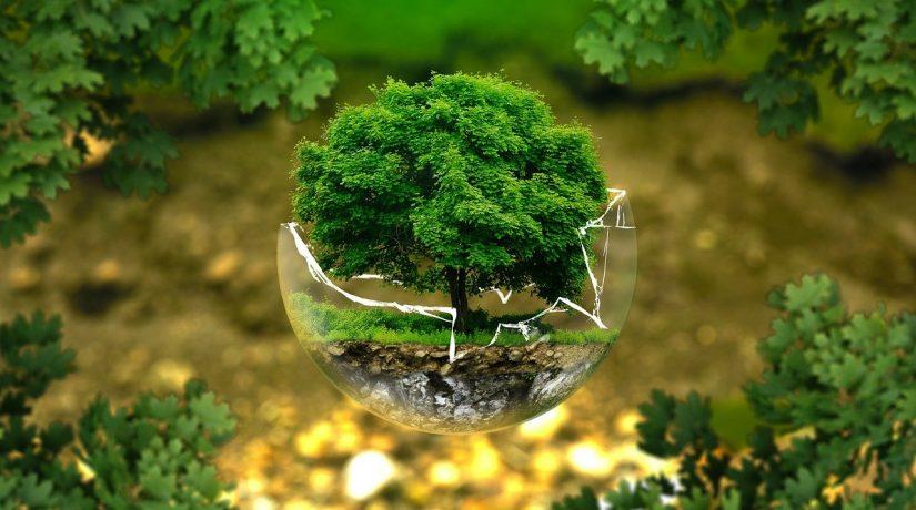 Retoryka ekologii w kulturze wizualnej